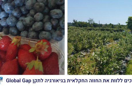 """גלובלגאפ – תקן לשיווק ברשתות מזון בחו""""ל"""
